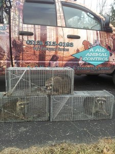 A All Animal Control o...