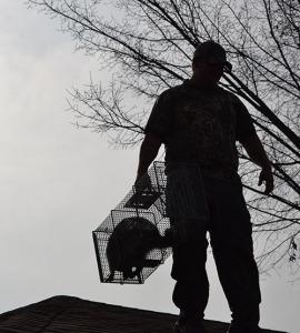 dallas animal removal