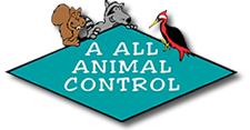 A All Animal Control