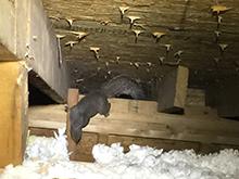 squirrels-attic