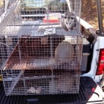 Pikeville animal removal