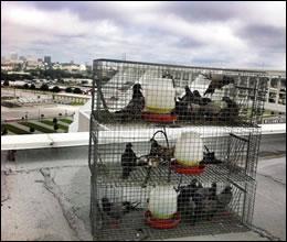 bird control Morehead