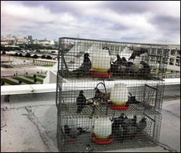 bird control Ashland