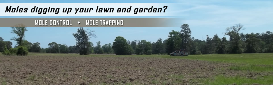 Mole Control & Mole Trapping By A All Animal Control