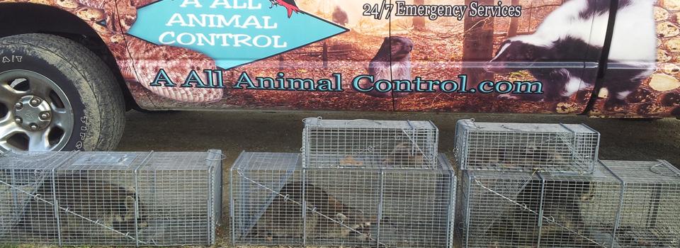 A All Animal Control R...