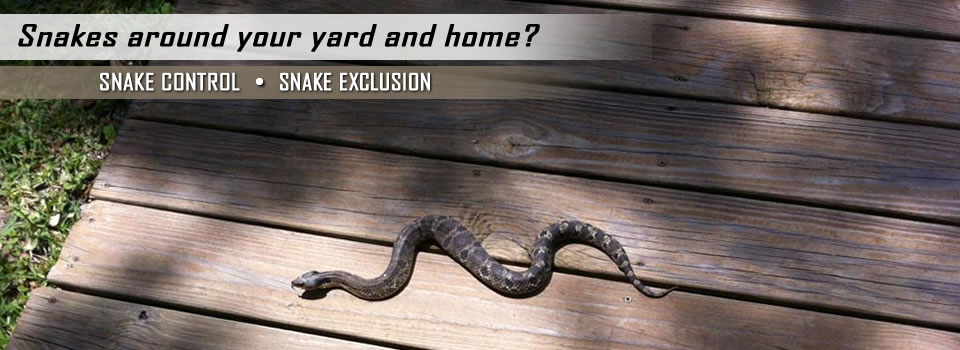 Snake Control And Exclusion