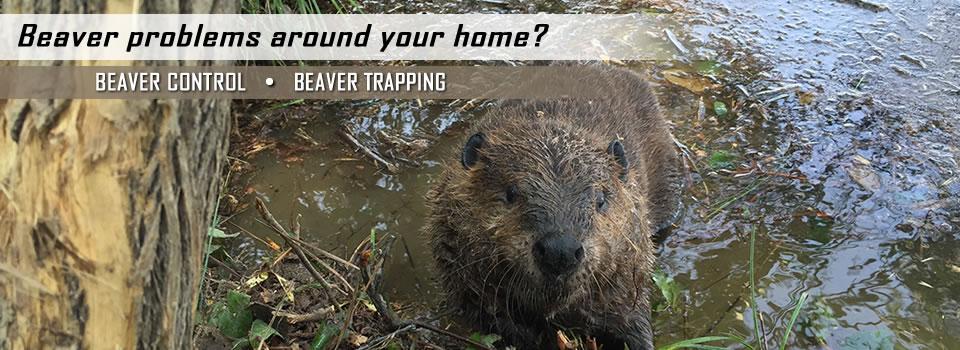 beaver-control-slider-1