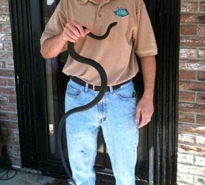 columbus-snake