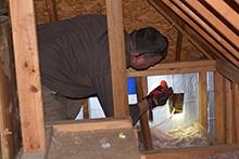 wildlife-in-attic