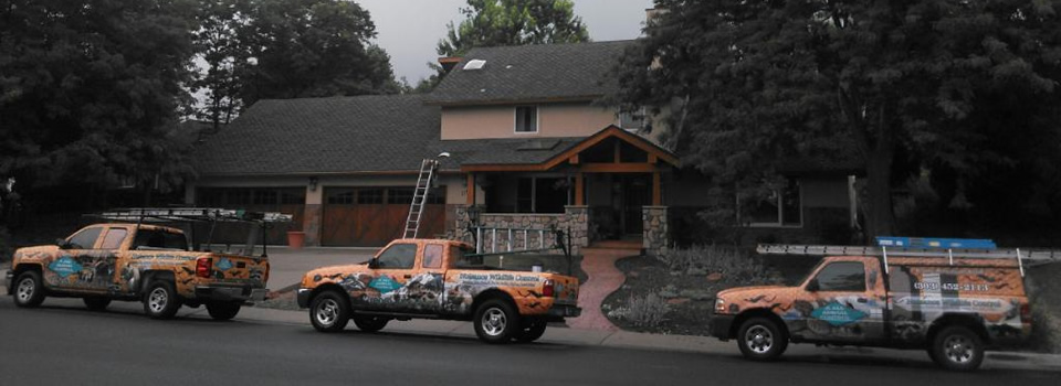 denver-wildlife-removal