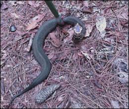 snake control louisville