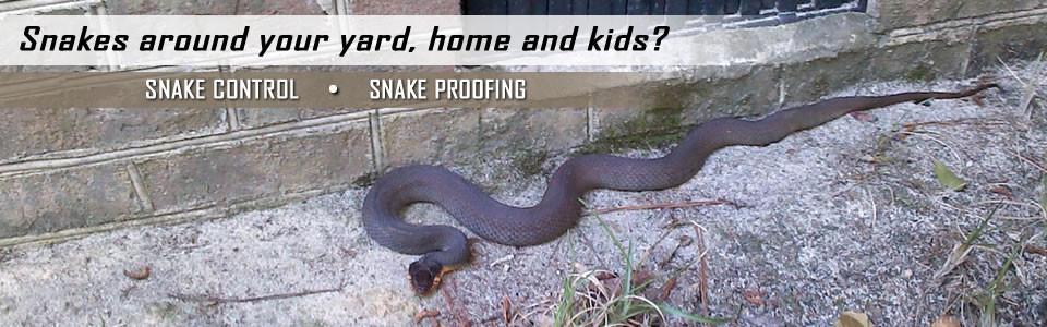snake-control-slider-960x300