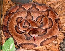 snake-removal-blog-houston