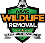 Huntsville Wildlife Removal