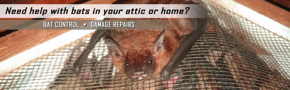 Bat Control Bat Removal Lexington Kentucky