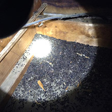 bats in attic louisville