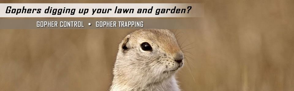 gopher-control-slider