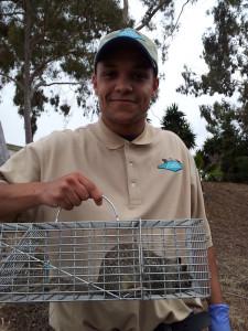 nashville squirrel removal