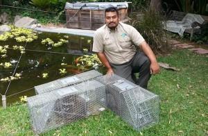 nashville raccoon removal