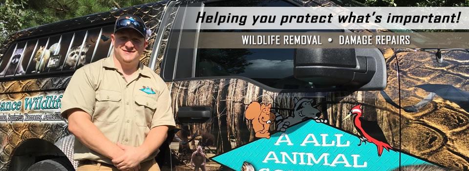 wildlife-removal-orlando