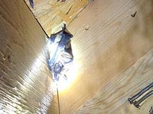 bat in house louisville