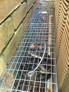 snake trapping Pensacola