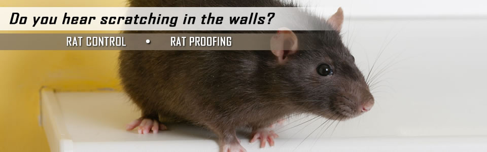 rat-control-slider-960x300