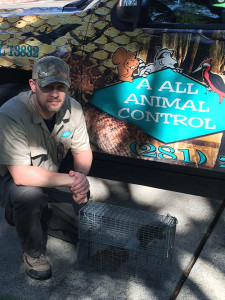 pitttsburgh squirrel removal