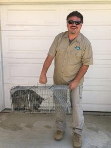 raccoon removal riverside