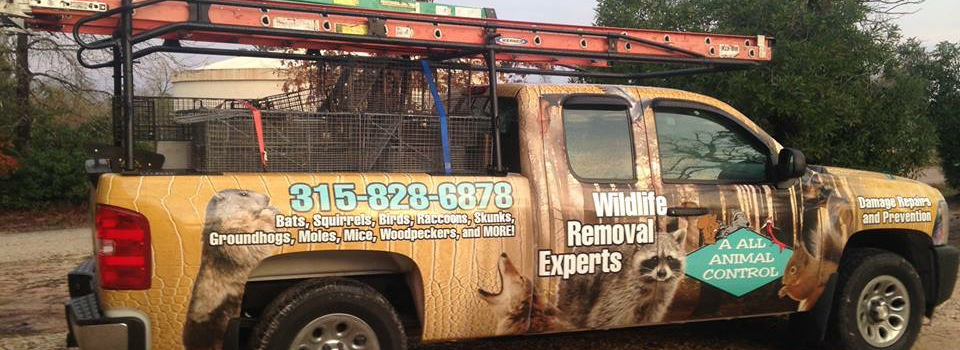 rochester animal removal