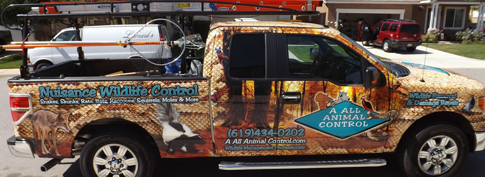 san-diego-animal-removal
