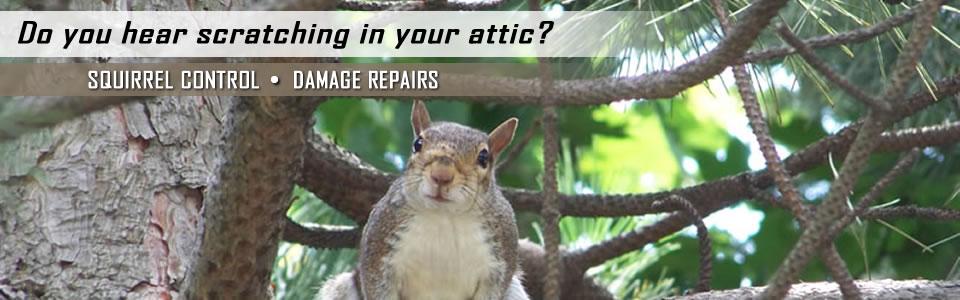 Squirrel Control And Damage Repairs