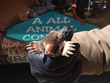 Mole-AAAC Wildlife Removal
