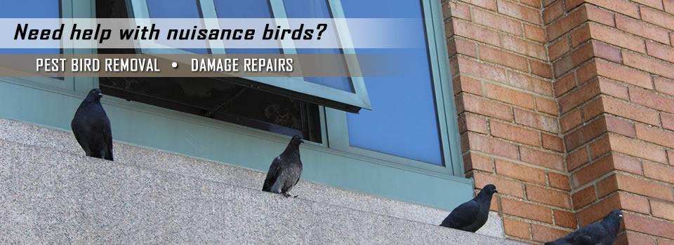 bird-control-slider