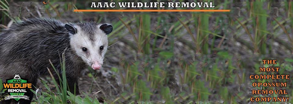 opossum-control-slider-new