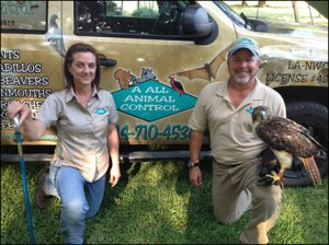 McKinney Animal Removal