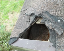 Damage repairs, Wildlife Damage prevention