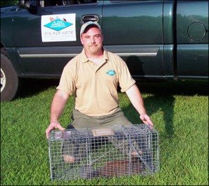 Syracuse animal removal